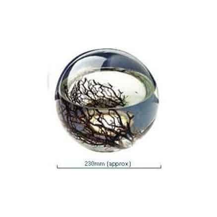 Ecosphère ronde 23 cm Atlantique