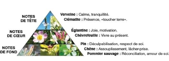 Eau de parfum Présence(s) Fleurs de Bach Elixir & Co