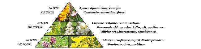 Pyramide olfactive Eau de Parfum Vivacité de Bach Elixir & Co